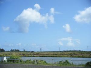 kahuku shrinp pond