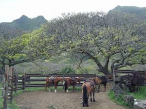 kualoa ranch umauma4142009