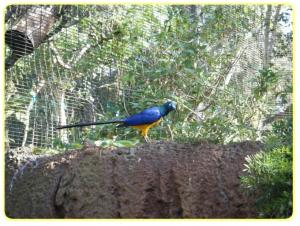 honolulu zoo birds