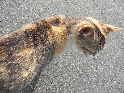 坂手の猫1