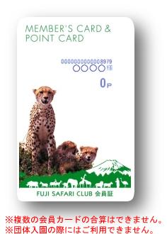 cheetah_card.jpg