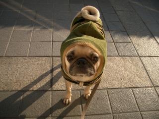 お散歩に行こう!