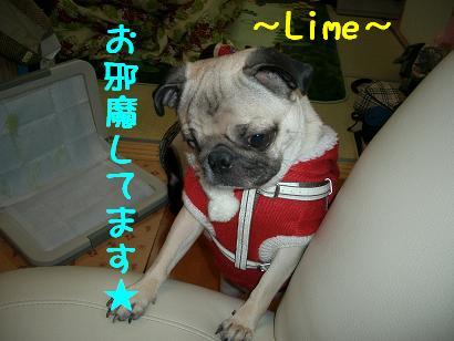 お邪魔してます★ Lime