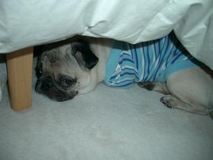 眠くなってきちゃった。。。