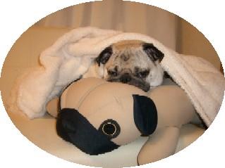 Pug on the Pug