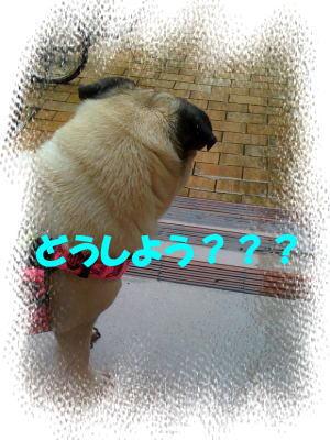 image3_20100619233135.jpg