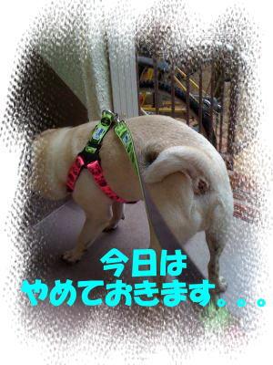 image7_20100619233214.jpg