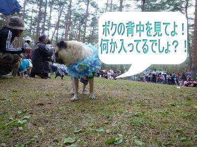 image_20100605155807.jpg
