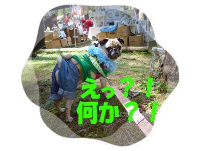 lime_.jpg