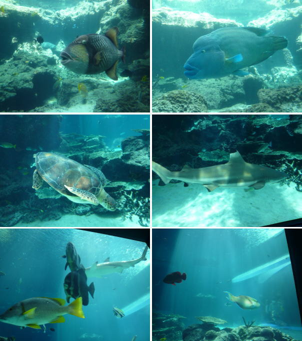 tropical_fish.jpg