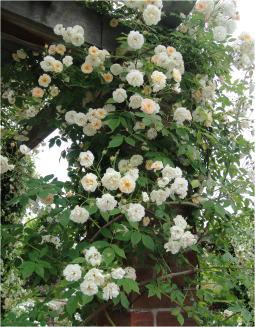 花フェスタDSC01413