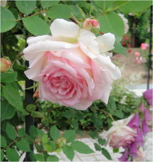 花フェスタDSC01455