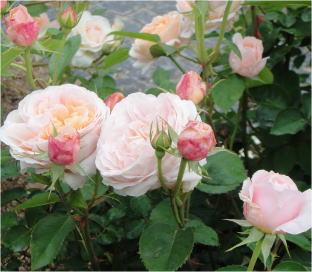 花フェスタDSC01482