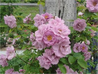 花フェスタDSC01501