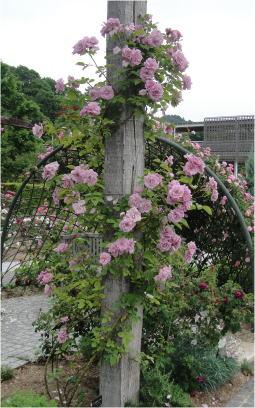 花フェスタDSC01510