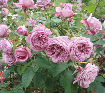 花フェスタDSC01538