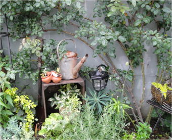 立川gardencraftsDSC02572