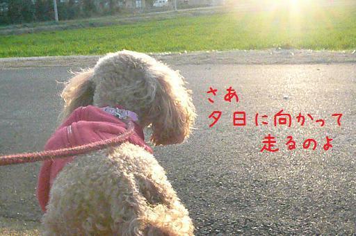 夕焼けのお散歩2