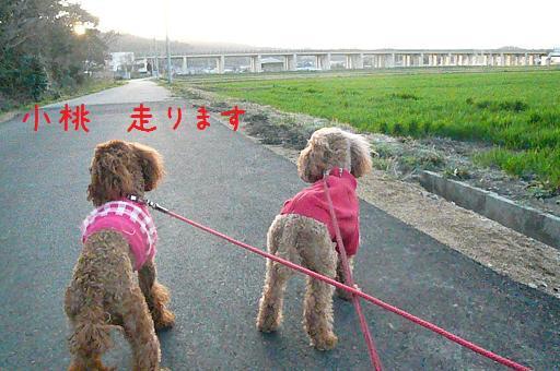 夕焼けのお散歩4