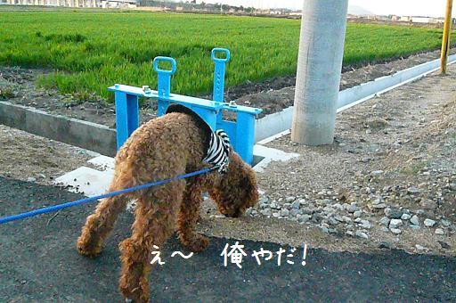 夕焼けのお散歩3