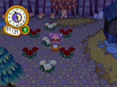 バラの7本植え