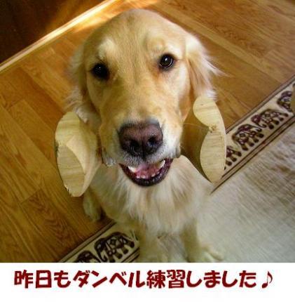 SANY0001_20081222153038.jpg