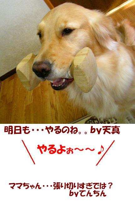 SANY0002_20081222153056.jpg