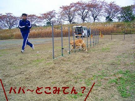 SANY0011_20081125215911.jpg