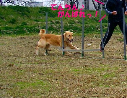 SANY0018_20081125215958.jpg
