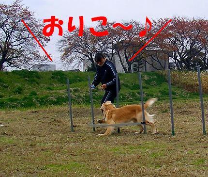 SANY0021_20081125220022.jpg