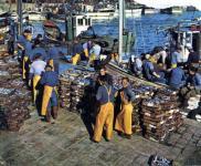 港の漁師さんたち