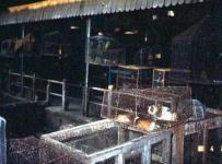 ムアー市場の肉屋さん