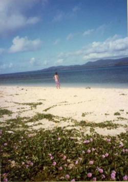 西表島海岸と花