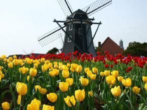 オランダ風車web
