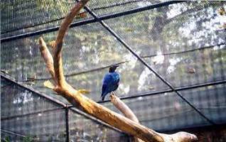 ボタニカル植物園の鳥