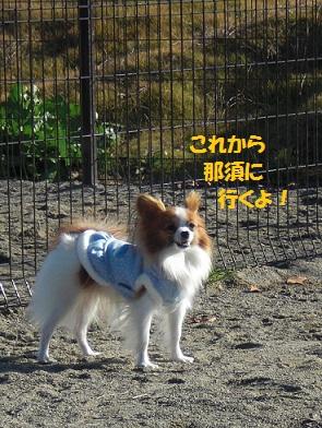 b201112077.jpg