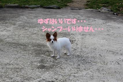 b2011121926.jpg