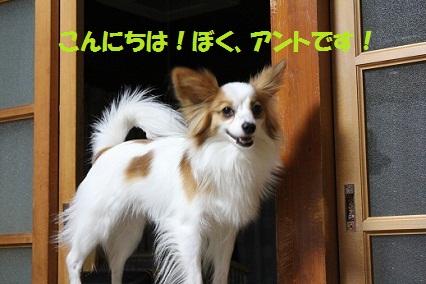 b201201151.jpg