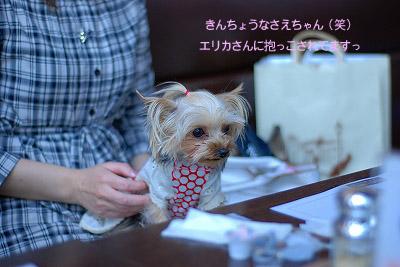 DSC_0229のコピー