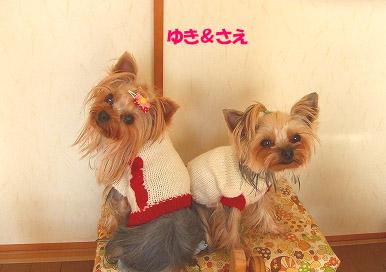 yukisae.jpg