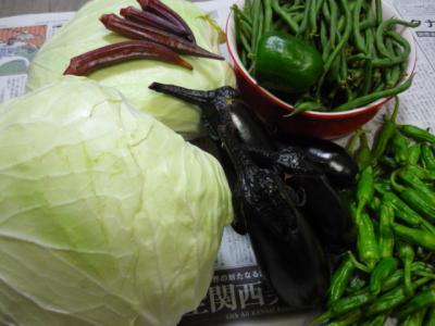 野菜 キャベツ類