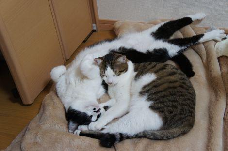 これで寝てんだからスゴイ