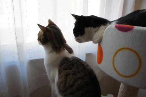 お隣の猫ちゃんいるかな?