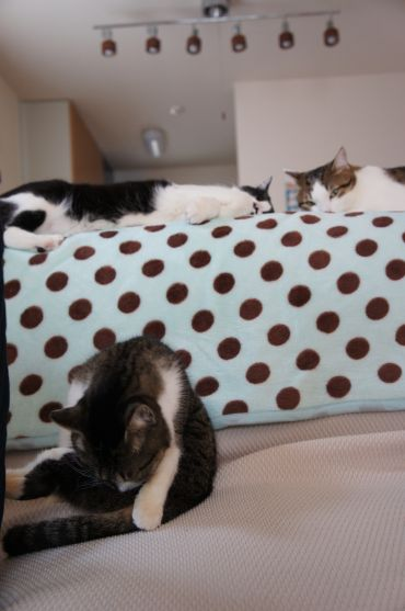 3様の猫模様