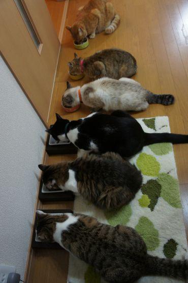 福島CATS