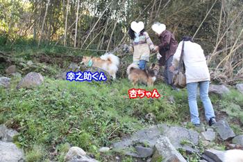 2011_1113_幸たん杏ちゃん