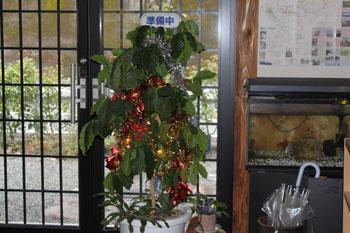 2011_1210_コーヒーの木