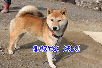 2011_1215_サスケ