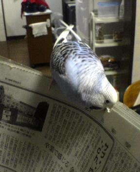 パパと新聞読んでるの~