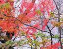 IMG_0323_convert_20091114180237.jpg